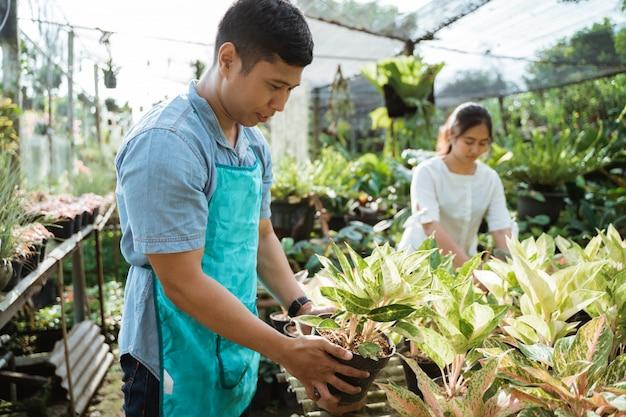 Jardineiro inspecionar suas plantas