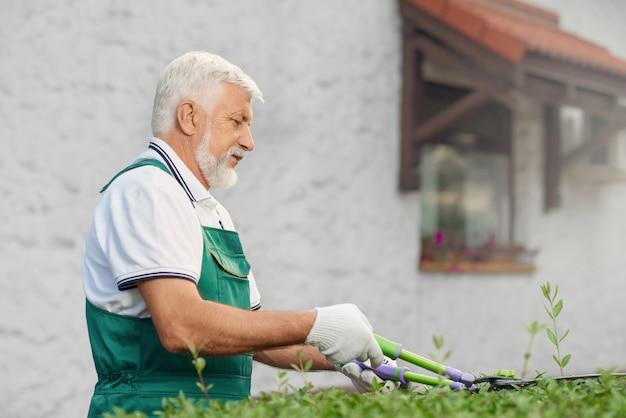Jardineiro masculino de eldery que corta arbustos cobertos de vegetação.