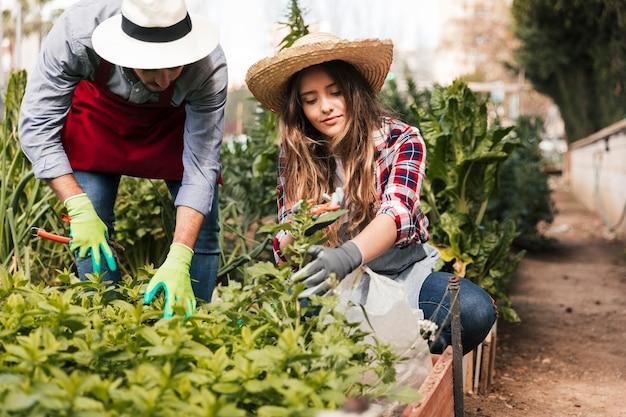 Jardineiro masculino e feminino, podando as plantas no jardim doméstico