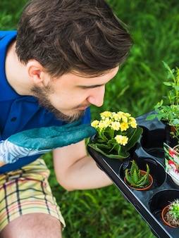 Jardineiro masculino olhando planta suculenta