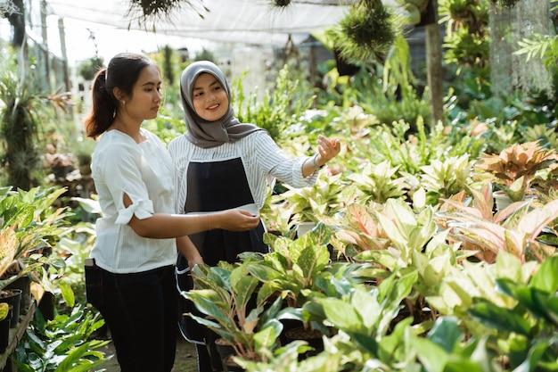 Jardineiro mulher e cliente durante a compra de plantas