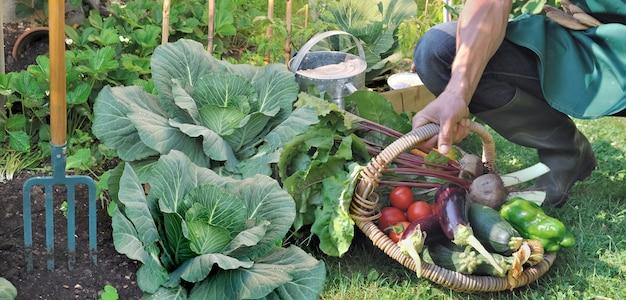 Jardineiro pendurando uma cesta cheia de vegetais em um jardim Foto Premium