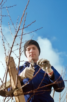 Jardineiro podando brunches de damasco