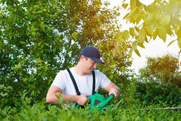 Jardineiro profissional aparando a cerca viva no quintal.