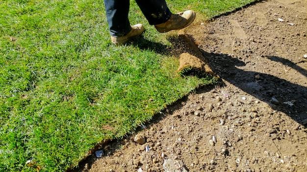 Jardineiro profissional novo da instalação da grama do relvado. rolos de grama no quintal.