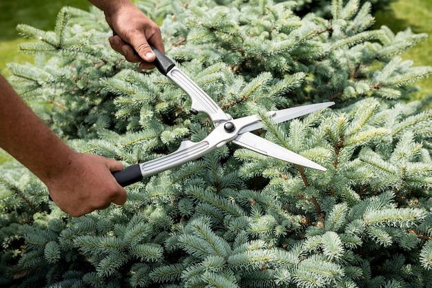 Jardineiro profissional podando uma árvore com uma tesoura de jardim