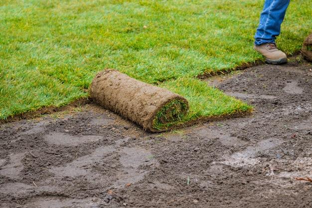 Jardineiro que instala o instalador profissional do relvado natural da grama campo bonito do gramado.