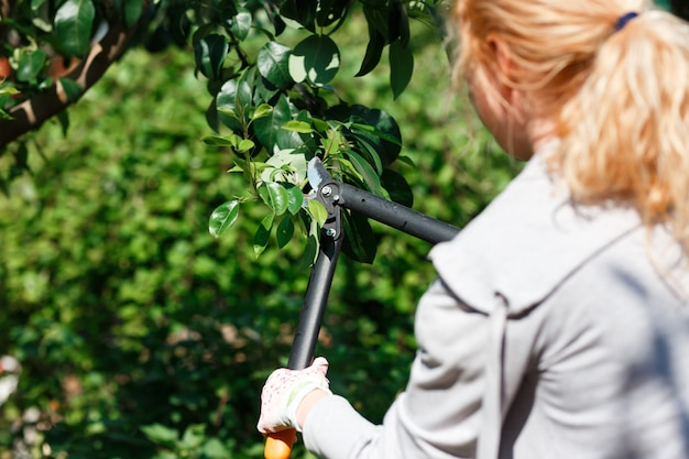 Jardineiro que poda árvores frutíferas com tesouras de poda.