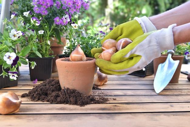 Jardineiro segurando bulbos de flores ao lado de um vaso cheio de terra sobre uma mesa no jardim