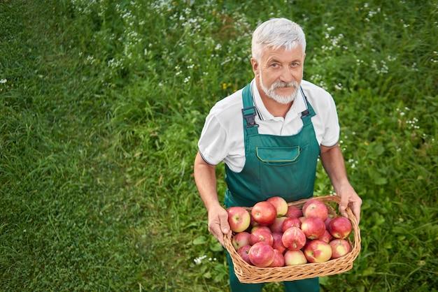 Jardineiro segurando cesta cheia de maçãs vermelhas frescas e em pé na graça.