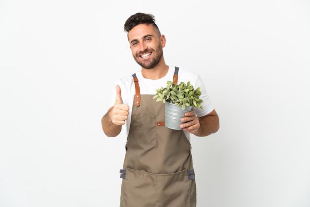 Jardineiro segurando uma planta sobre um fundo branco isolado com o polegar para cima porque algo bom aconteceu