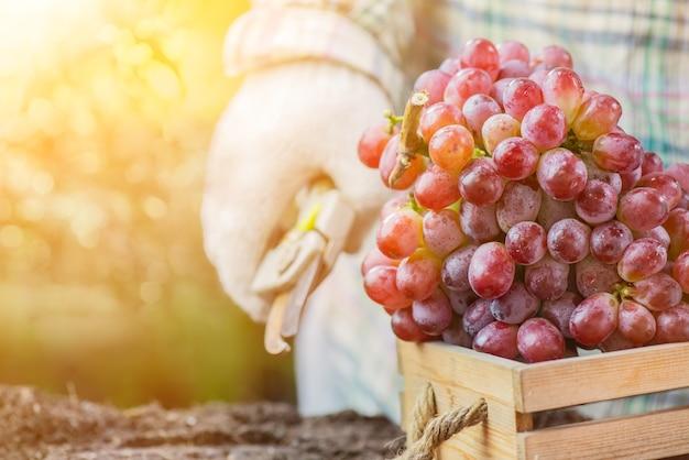 Jardineiros colhendo uvas na fazenda. colheita de cornucópia no outono. temporada de outono com frutas frescas.