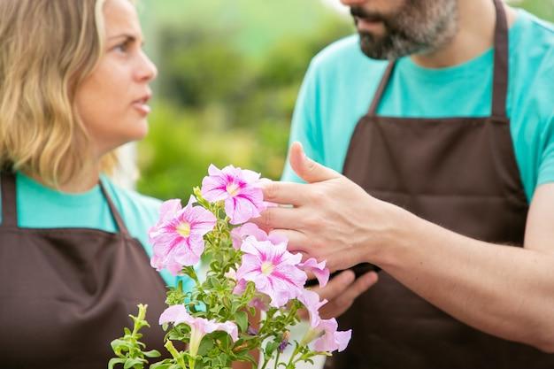Jardineiros desfocados falando sobre flores de petúnia