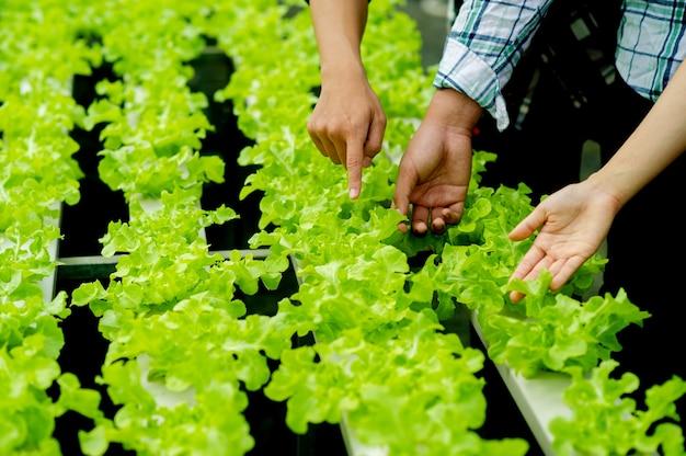 Jardineiros e alface orgânica no enredo conceito de alimentação saudável alimentos orgânicos cultivam vegetais para comer em casa horta orgânica para a saúde, vegetais verdes
