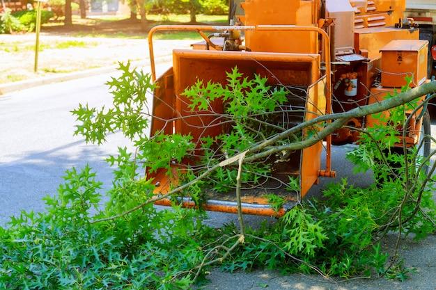 Jardineiros profissionais estão colocando os galhos de uma árvore aparada em um picador de madeira