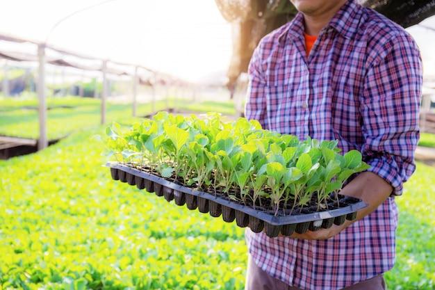 Jardineiros seguram bandejas vegetais orgânicas.