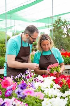 Jardineiros sérios trabalhando em estufas e verificando flores