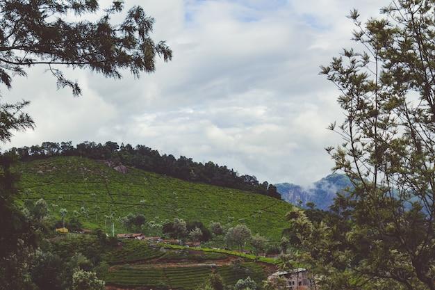 Jardins de chá