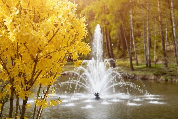 Jardins ornamentais com lago, arbustos floridos e fonte