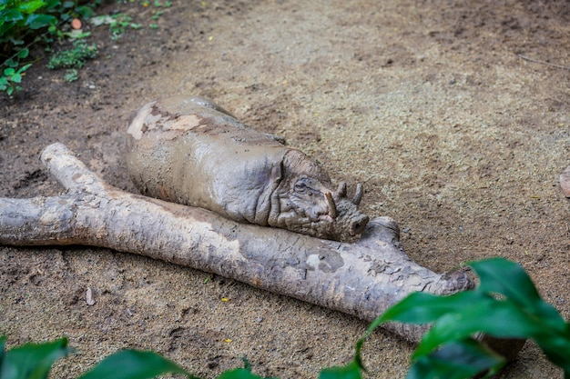 Javali sujo pequeno deitado perto da árvore