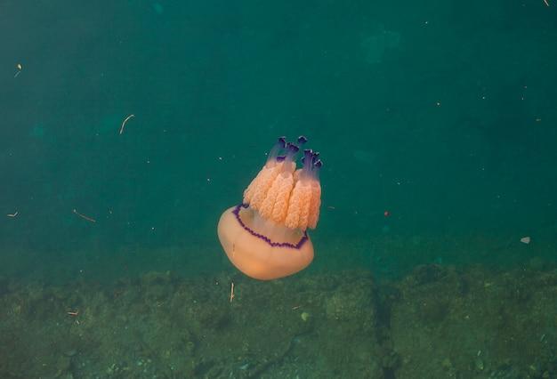 Jellyfish natação subaquática