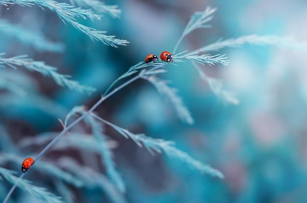 Joaninha rastejando em uma folha de grama
