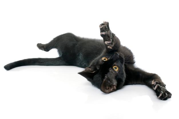 Jogando gatinho preto