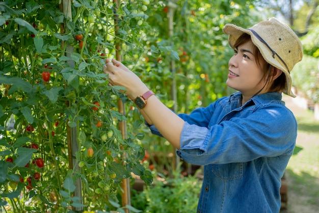 Jovem agricultor asiático verificando a qualidade da planta antes de vendê-la na loja da fazenda.