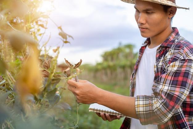 Jovem agricultor asiático verificando sua planta ou vegetal