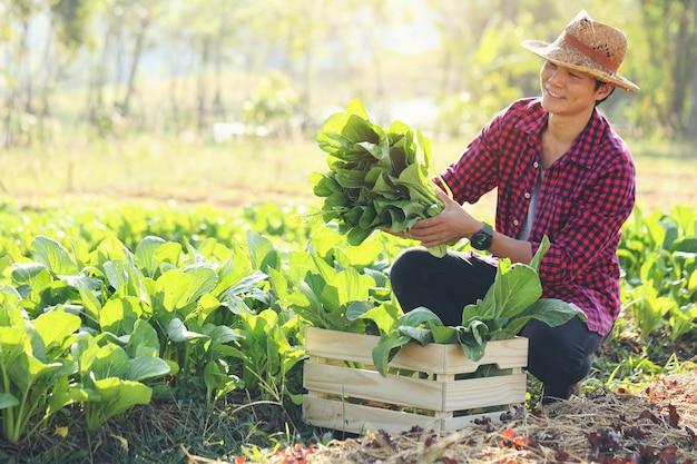 Jovem agricultor com legumes orgânicos em caixas de madeira ele vai entregar legumes frescos aos clientes.