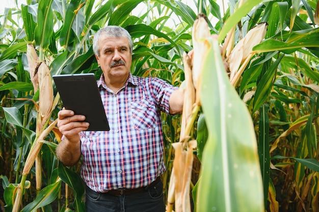 Jovem agricultor examina semente de milho em campos de milho durante a colheita