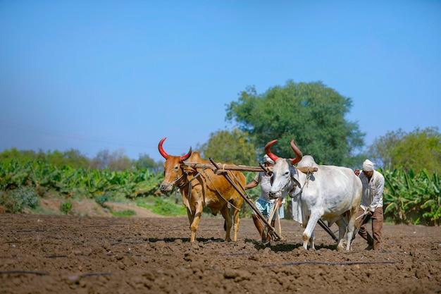 Jovem agricultor indiano arando no campo
