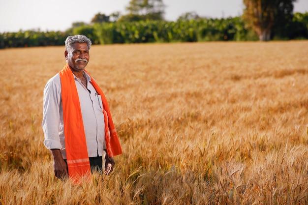 Jovem agricultor indiano em seu campo de trigo dourado