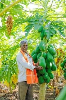 Jovem agricultor indiano no campo de mamão