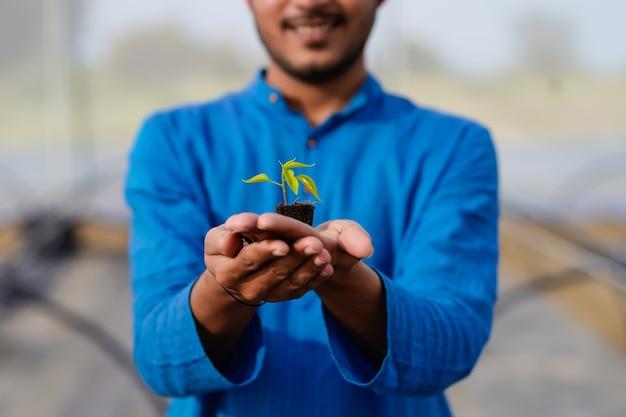 Jovem agricultor indiano segurando uma pequena safra de pimentão na casa verde