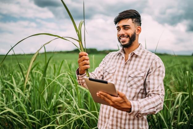 Jovem agricultor latino trabalhando com tablet digital na plantação de cana-de-açúcar. agricultor brasileiro.