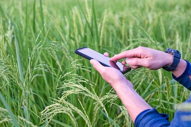 Jovem agricultor moderno usando a tecnologia do telefone móvel no campo de arroz.