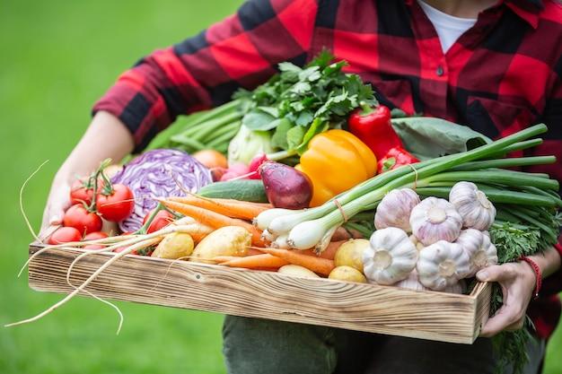 Jovem agricultor segurando uma caixa cheia de legumes frescos.