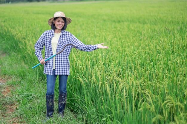 Jovem agricultora asiática feliz levanta a mão na fazenda de arroz