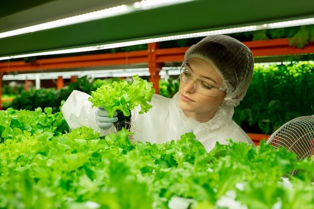 Jovem agroengenheira contemporânea em trajes de trabalho de proteção, parada na prateleira com alface verde em uma fazenda vertical e segurando uma pequena panela