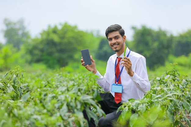 Jovem agrônomo indiano mostrando telefone inteligente com fazendeiro em campo de pimenta verde