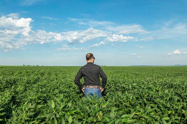 Jovem agrônomo olhando para a plantação de soja.
