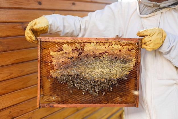 Jovem apicultor feminino segurar a moldura de madeira com favo de mel