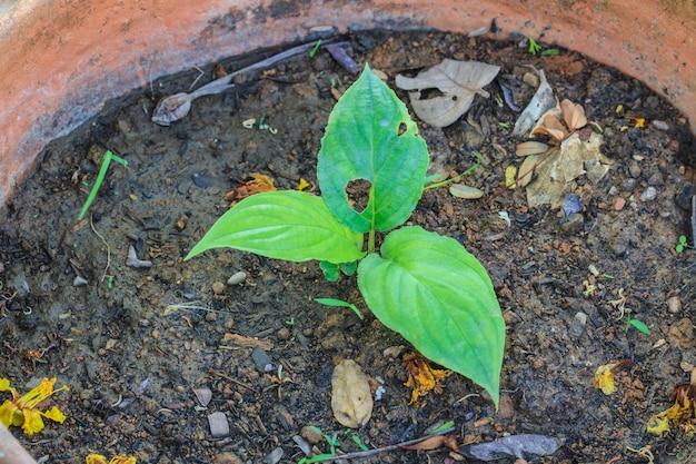 Jovem árvore crescendo em pote