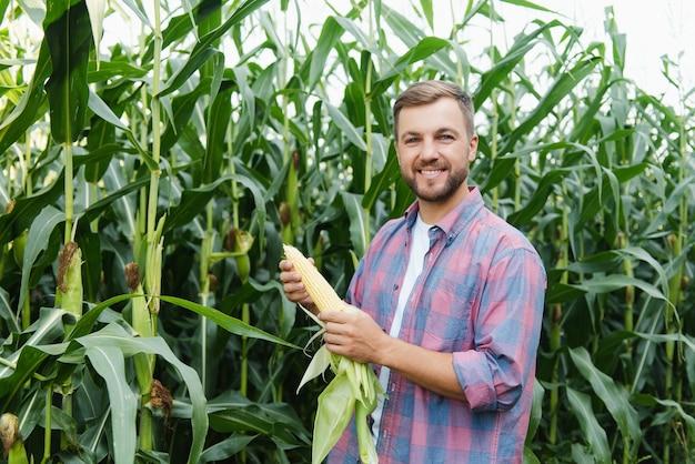 Jovem atraente com barba verificando espigas de milho no campo no final do verão