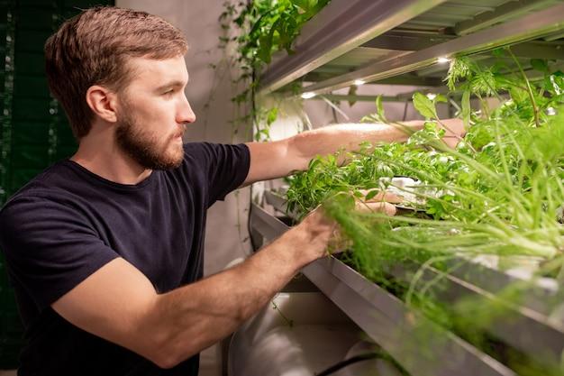 Jovem bonito com barba tocando plantas enquanto as examina em casa