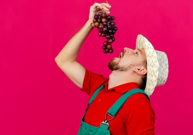 Jovem bonito jardineiro eslavo de uniforme e chapéu segurando a uva acima da cabeça, olhando para cima se preparando para comer uva