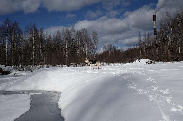Jovem cadela vira-lata na neve em um dia ensolarado