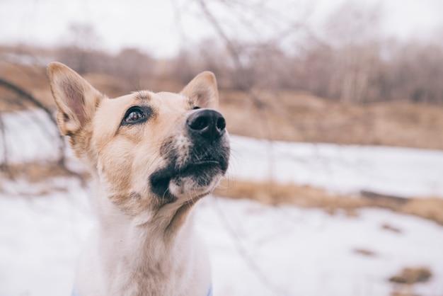 Jovem cão com pedigree na caminhada