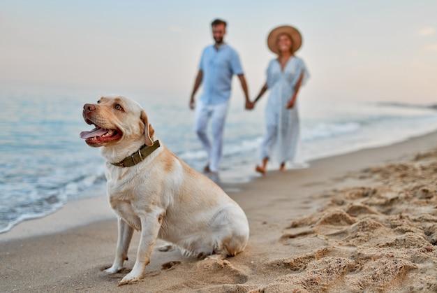 Jovem casal apaixonado, caminhando na praia de mãos dadas com seu cachorro labrador e se divertindo nas férias.